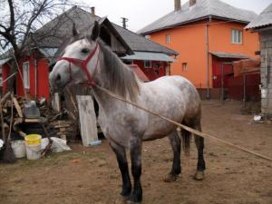 mihai_vasilescu_iapa
