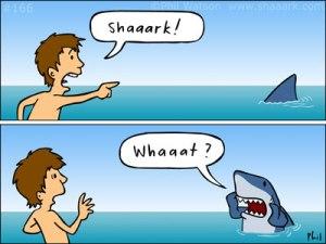mihai_vasilescu_shark