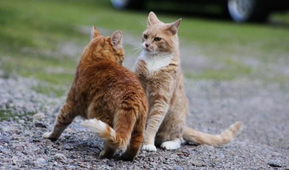 mihai_vasilescu_cat_fight